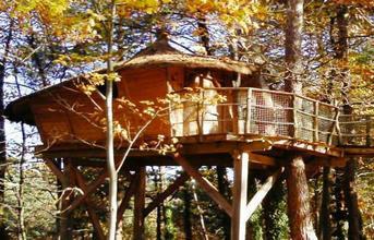 Tree houses Margot